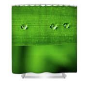 Droplets On Grass Shower Curtain