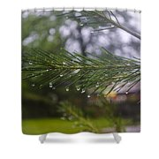 Droplets On Pine Branch Shower Curtain