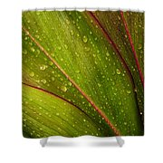 Droplets On Ti Leaves Shower Curtain