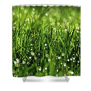 Drops Shower Curtain