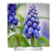 Drops Met Hyacinth Shower Curtain