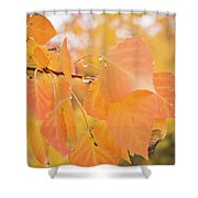 Drops Of Autumn Shower Curtain