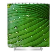 Drops Of Spring Rain Shower Curtain