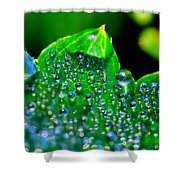 Drops On Leaf Shower Curtain