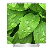 Drops On Leaves Shower Curtain