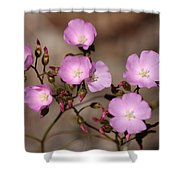 Drosera Menziesii Shower Curtain