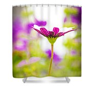 Drowning In The Sun Rays Shower Curtain