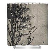 Dry Desert Shower Curtain