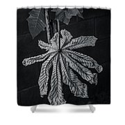 Dry Leaf Collection Bnw 2 Shower Curtain