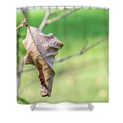 Dry Leaves Shower Curtain
