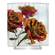 Dry Roses Shower Curtain