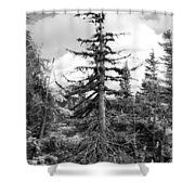 Dry Spruce Shower Curtain