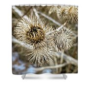 Dry Thistle Buds Shower Curtain
