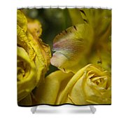 Drying Group - 310020 Shower Curtain