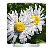Dual Daisies Shower Curtain