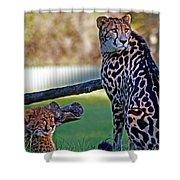 Dubbo Zoo Queen - King Cheetah And Cub Shower Curtain