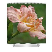 Dublin Elaine - Daylily Shower Curtain