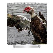 Duck 14 Shower Curtain