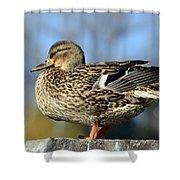 Duck 2 Shower Curtain