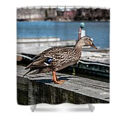 Duck About To Jump. Shower Curtain