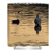 Duck And Swan At Sunrise Shower Curtain