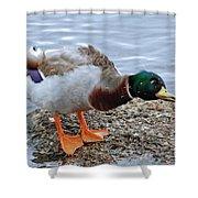 Duck Bath Alantic Beaches Nc Shower Curtain