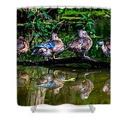 Duck Duck Duck Duck Shower Curtain