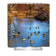 Duck Duck Goose Goose Shower Curtain