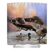 Duck Ducks 2 Shower Curtain