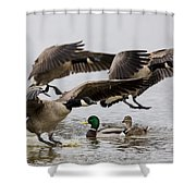 Duck Ducks Shower Curtain
