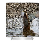 Duck In A Flap Shower Curtain