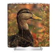 Duck In Autumn Shower Curtain
