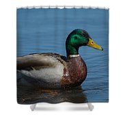 Duck In Water Shower Curtain