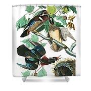 Lummer Or Wood Duck Shower Curtain