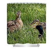 Duck Meeting At Frankenmuth Shower Curtain