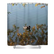 Duck On Golden Pond Shower Curtain