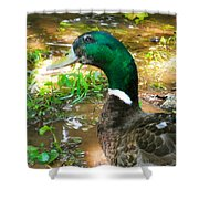 Duck On The Lake 1 Shower Curtain