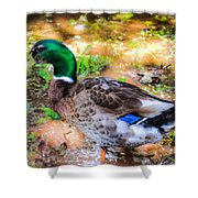 Duck On The Lake 2 Shower Curtain