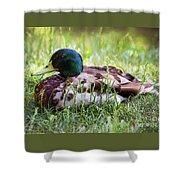 Duck Portrait Shower Curtain