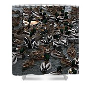 Duck Soup Shower Curtain