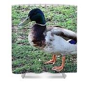 Duck - Standing Shower Curtain