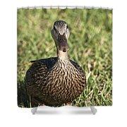 Duck Stare Shower Curtain