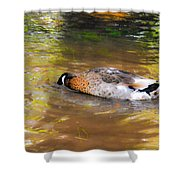 Duck Submerge It Head Into The Water Looking For Food In The River 2 Shower Curtain