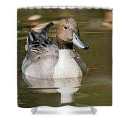 Duck Swimming, Front Portrait. Shower Curtain