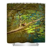 Duck Tales.  Shower Curtain