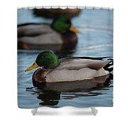 Duck Trio Shower Curtain