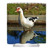 Duck Twice Shower Curtain