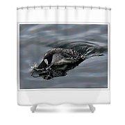 Ducking Shower Curtain