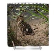 Duckling Lost Shower Curtain
