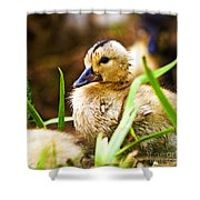 Duckling Shower Curtain